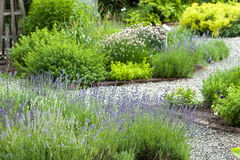 http://www.dreamstime.com/stock-image-herb-garden-image27684381