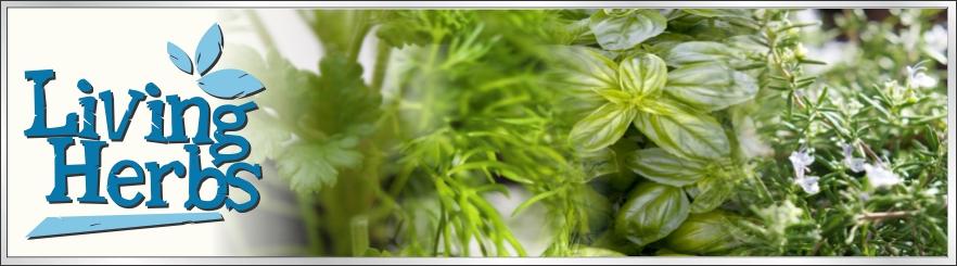 Living Herbs Auckland